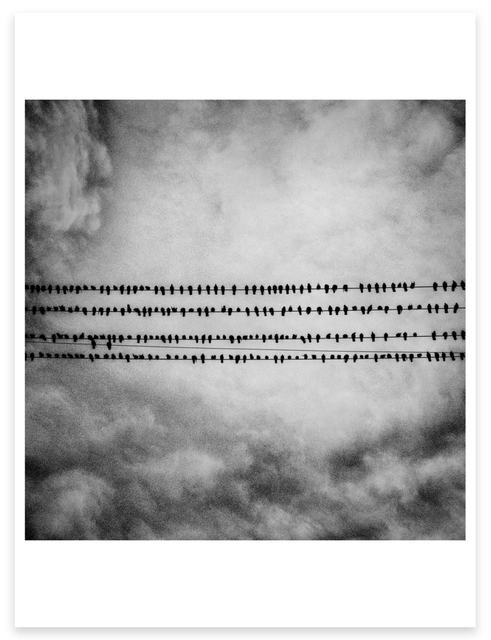 Magnum Editions Poster: Birds. Tulare, California. 2014.