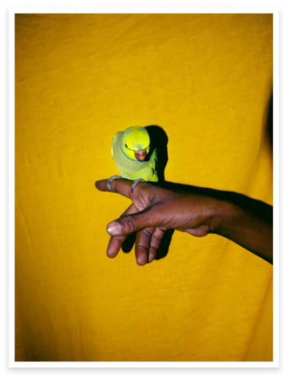 Magnum Editions Poster: The parrot and its fortune teller. India, 2014.