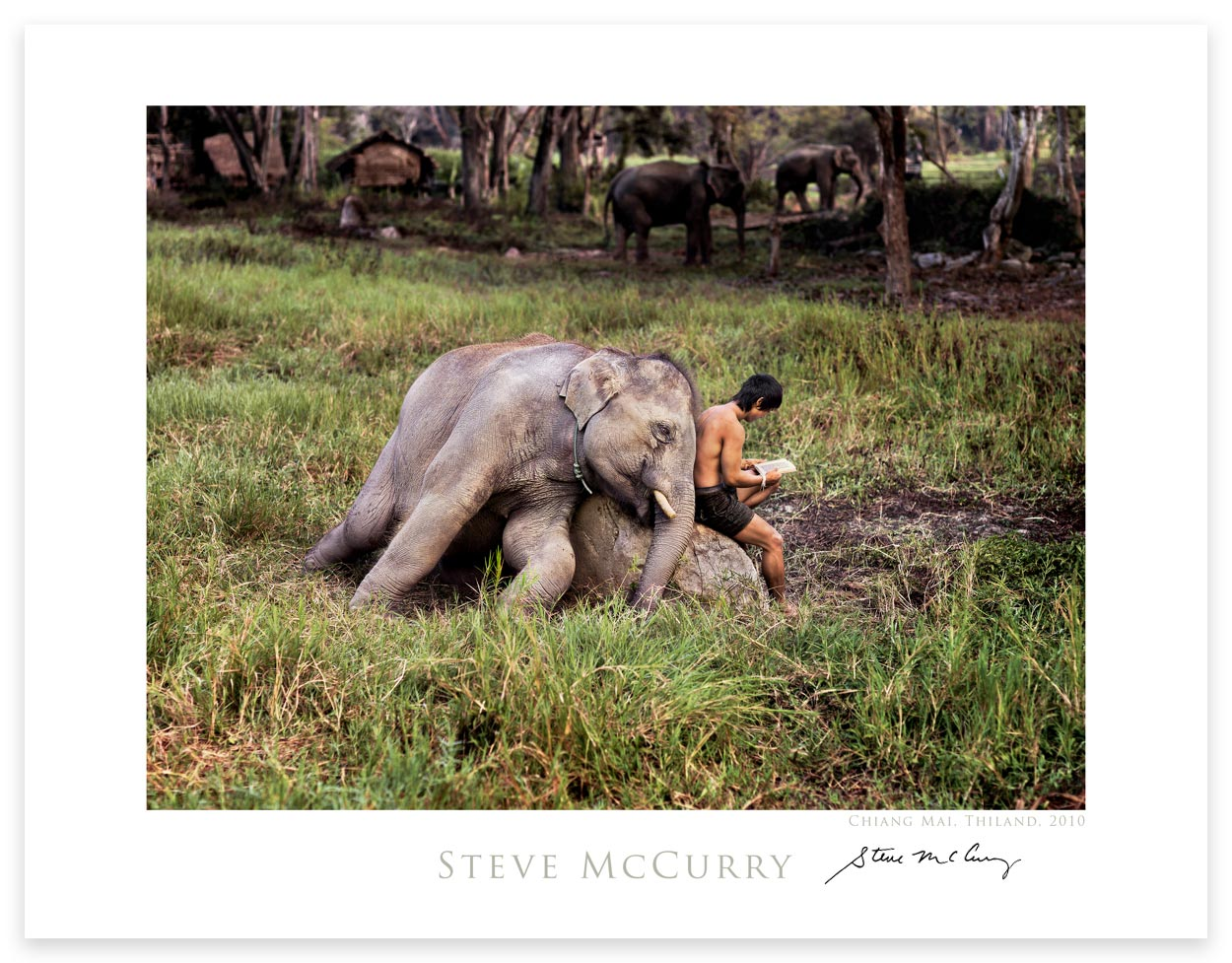 Signed Poster: Mahout Reads With His Elephant by Steve McCurry