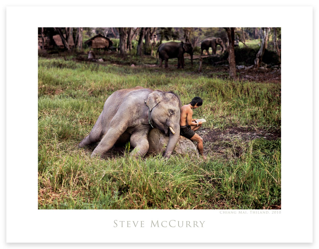 Poster: Mahout Reads With His Elephant by Steve McCurry